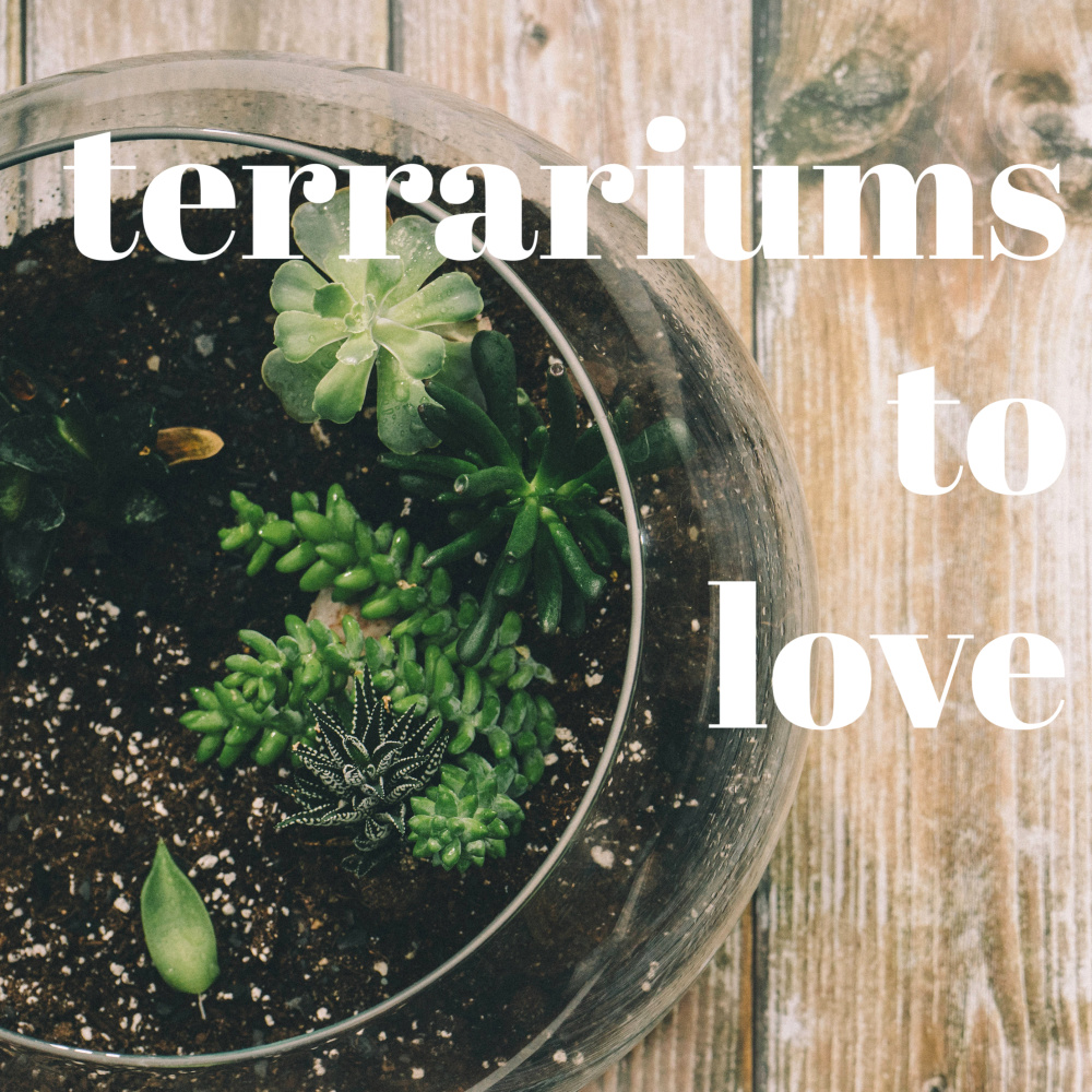 Terrariums To Love A Diy Collection Just A Little Creativity